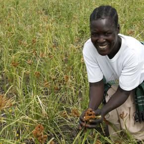 Inwestycje w rolnictwo kluczowe dla Afryki