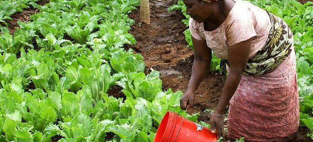 Rolnictwo: Pytania i odpowiedzi w kontekście współpracy Chin z krajami Afryki