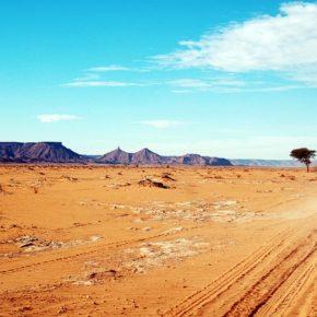 Jak wygrać w Afryce? według McKinsey & Company