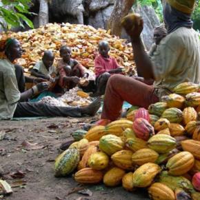 Dlaczego warto zainwestować w uprawę Kakaowca w Nigerii